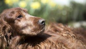 Dog website banner Royalty Free Stock Photos