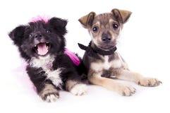 The dog wedding stock image