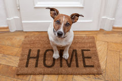 Dog welcome home. On brown mat