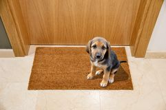 Dog welcome home Royalty Free Stock Photos