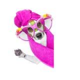 Dog wellness spa center Royalty Free Stock Photography