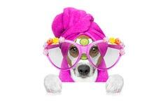 Dog wellness spa center Stock Photo