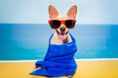 Dog wellness spa Royalty Free Stock Photography