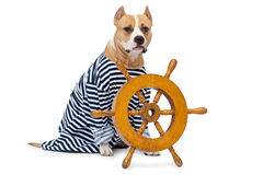 Dog and wheel vehicle Stock Photos