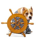Dog and wheel vehicle Royalty Free Stock Photos