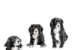 Dog. On a white background Royalty Free Stock Photo
