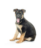 Dog on a white background Stock Images