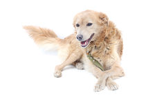 Dog on a white background. A dog on a white background Stock Photography