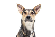 Dog on a white background royalty free stock photography