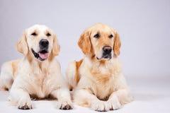 Dog on white background Stock Photos