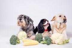 Dog on white background. And vegetables Stock Image