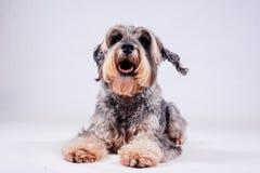 Dog on white background Stock Photo