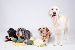 Dog on white background. And vegetables Royalty Free Stock Image