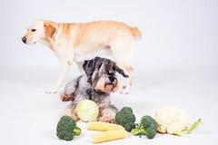 Dog on white background Royalty Free Stock Photo