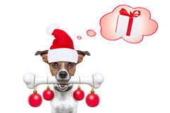 Dog with a white bone  for christmas santa claus Stock Photography