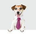 Dog white collar employee Stock Photos