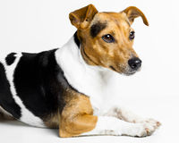 Dog on white Stock Photo