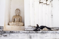 Dog on white pagoda in temple, Thailand Royalty Free Stock Images