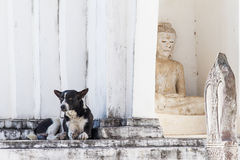 Dog on white pagoda in temple, Thailand. Stock Image