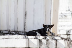 Dog on white pagoda in temple, Thailand. Stock Photos