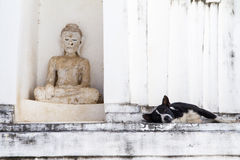 Dog on white pagoda in temple, Thailand. Stock Photography