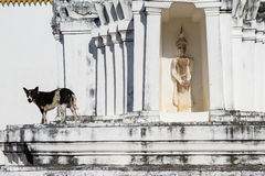 Dog on white pagoda in temple, Thailand. Royalty Free Stock Photos