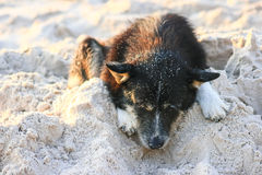 Dog on the white sand beach Royalty Free Stock Image