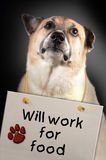 Dog will work for food Royalty Free Stock Photography