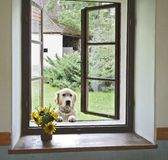Dog in window Royalty Free Stock Image