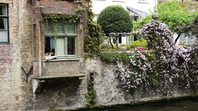 Dog in window at Groenere in Bruges in Belgium Stock Photography