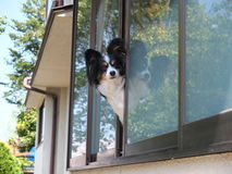 Dog at the window in Kyoto Royalty Free Stock Photos
