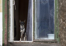 Dog in window Stock Photos