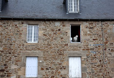 Dog in Window Royalty Free Stock Photos
