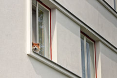 Dog In A Window Stock Photography