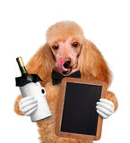 Dog with wine Royalty Free Stock Photo