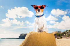 Dog winner Royalty Free Stock Photo