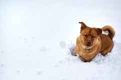 Dog in winter. Dog sitting on snow in winter time Royalty Free Stock Photography
