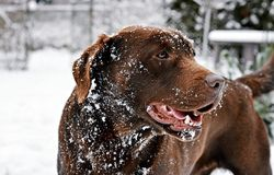 Dog and winter Stock Photos