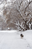 Dog in winter alley. Royalty Free Stock Image
