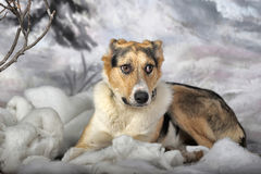 Dog on the winter background Stock Photography