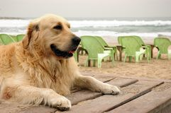 A dog on winter beach. A dog on cold winter beach royalty free stock photos