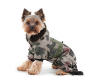 Dog with winter clothes Royalty Free Stock Photos