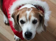 Dog on winter day stock photography