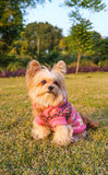 Dog in Winter Dress Royalty Free Stock Images