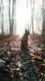 Dog in a winter forest. German shepherd sitting in the sun in a winter forest Stock Photo