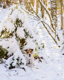 Dog at winter forest wonderland. Scene with an animal sitting under a tree Royalty Free Stock Images