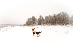 Dog in winter Stock Images