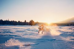 Dog in winter nature stock images