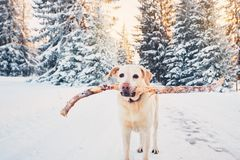 Dog in winter nature Royalty Free Stock Images