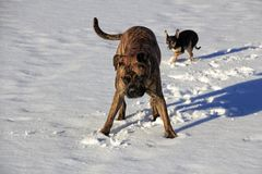 Dog Winter Outdoors Snow Lake Stock Photography